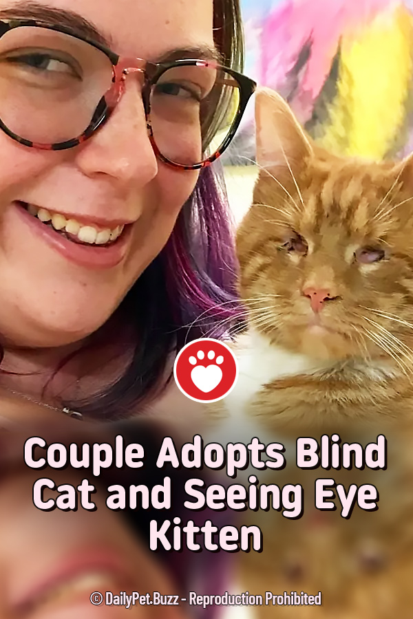 Couple Adopts Blind Cat and Seeing Eye Kitten
