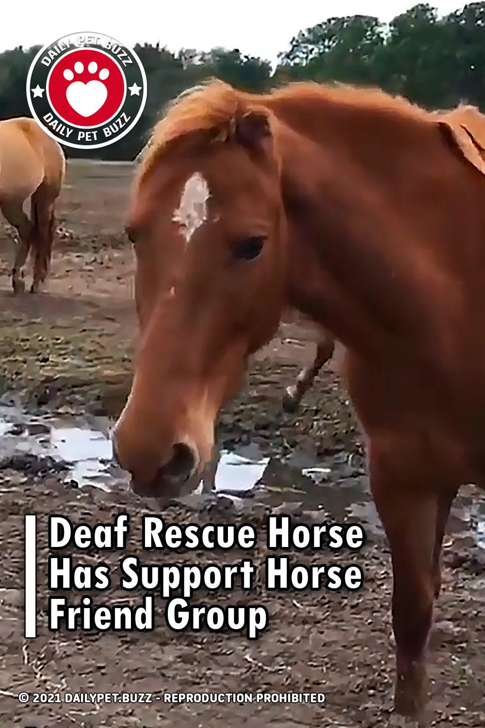 Deaf Rescue Horse Has Support Horse Friend Group
