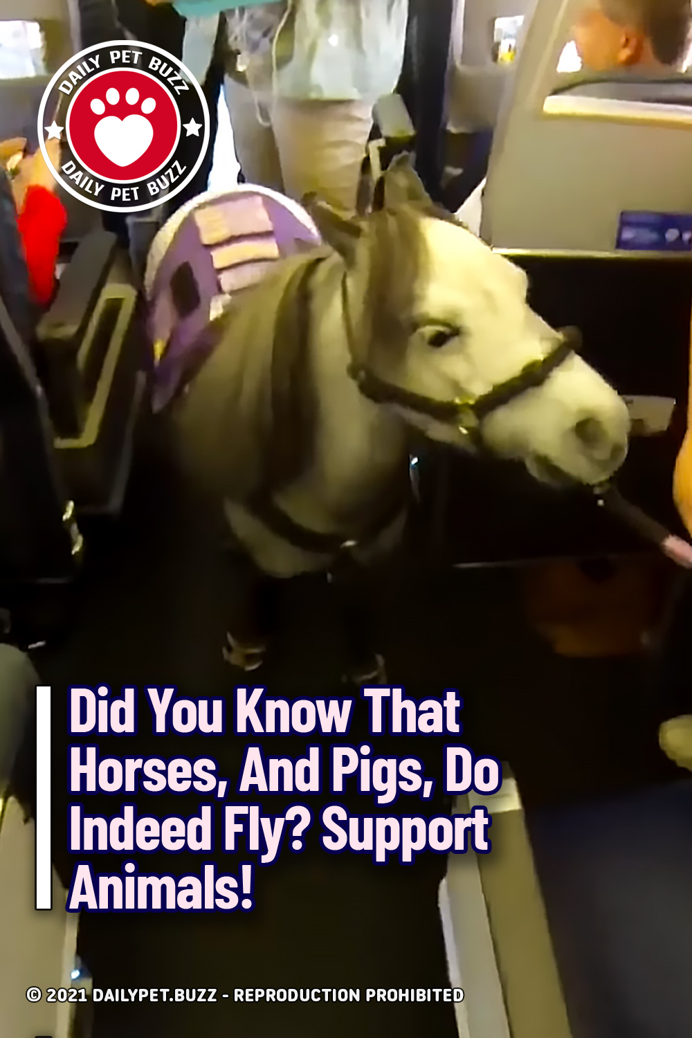 Did You Know That Horses, And Pigs, Do Indeed Fly? Support Animals!