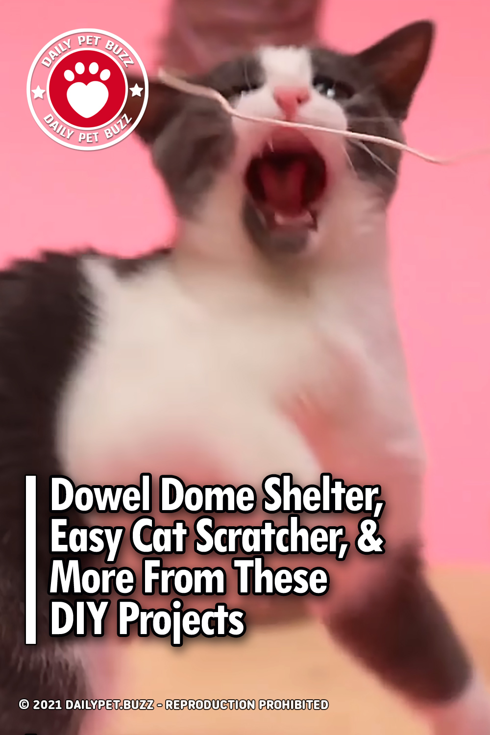 Dowel Dome Shelter, Easy Cat Scratcher, & More From These DIY Projects