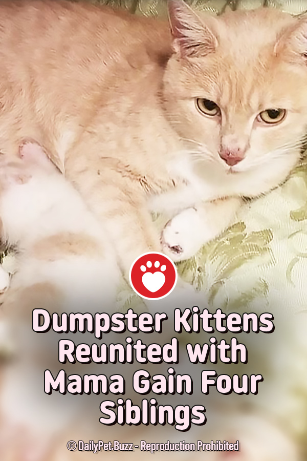 Dumpster Kittens Reunited with Mama Gain Four Siblings