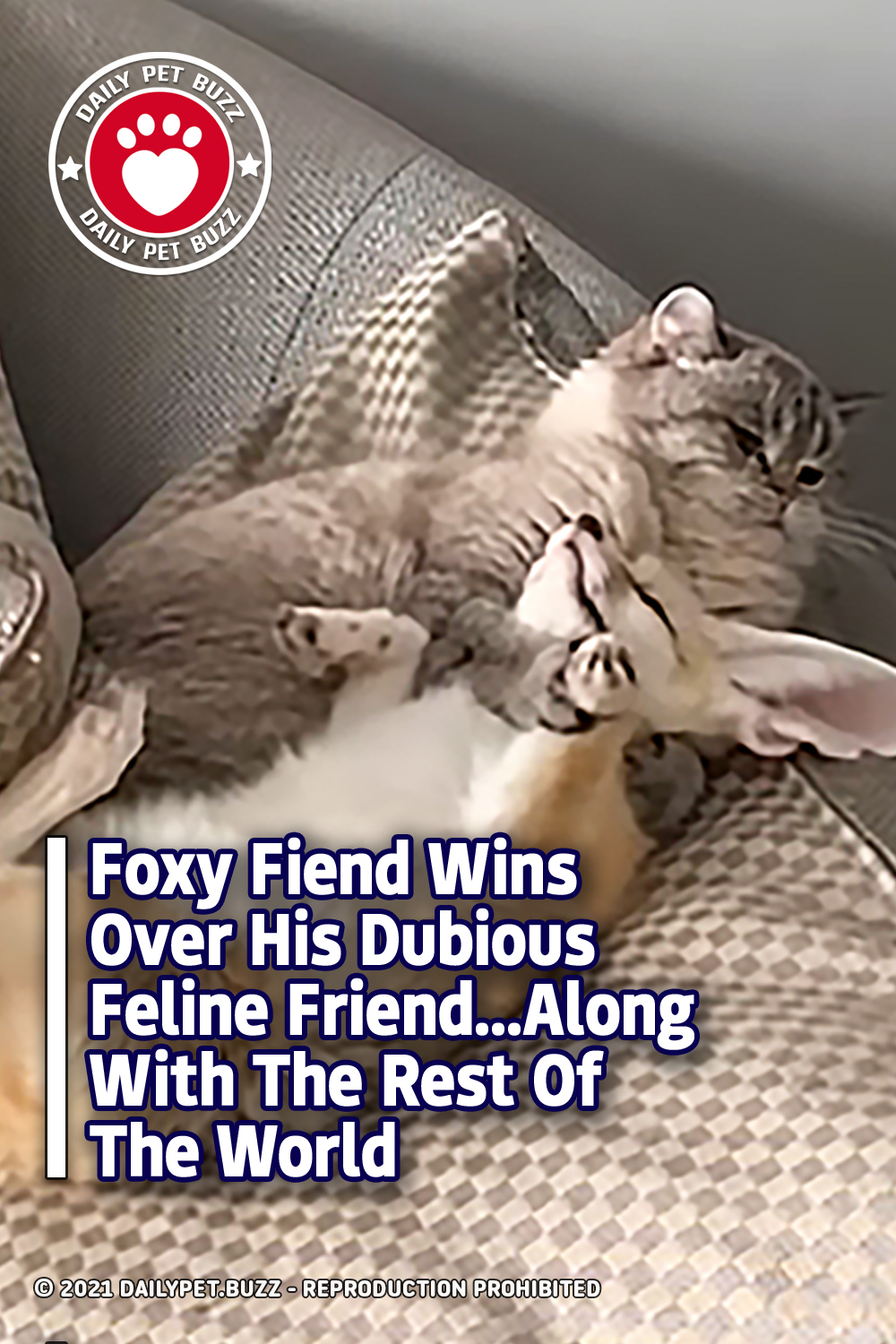 Foxy Fiend Wins Over His Dubious Feline Friend...Along With The Rest Of The World