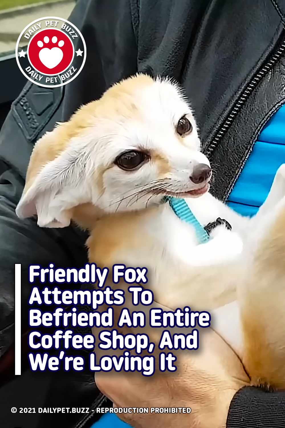 Friendly Fox Attempts To Befriend An Entire Coffee Shop, And We're Loving It
