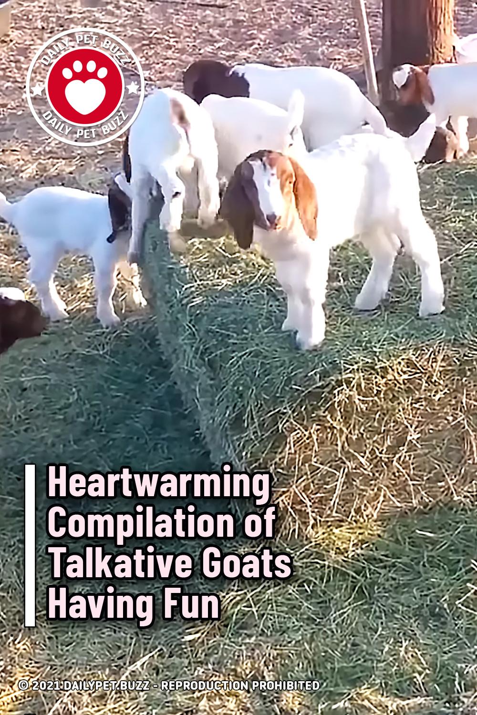 Heartwarming Compilation of Talkative Goats Having Fun