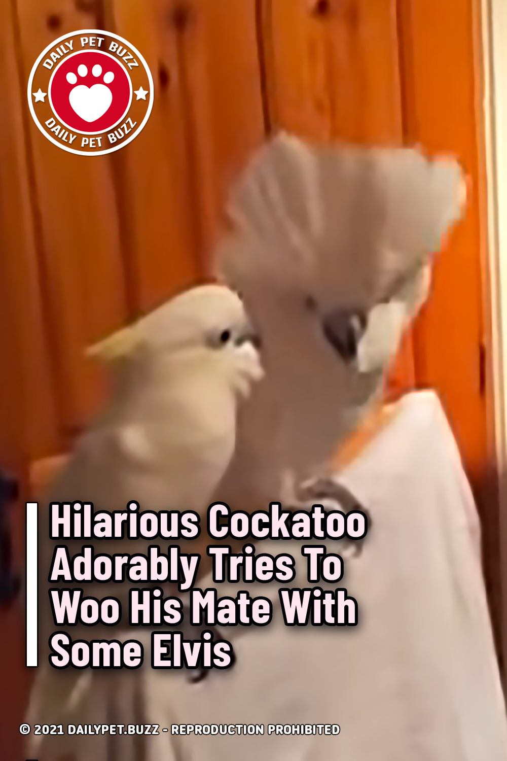 Hilarious Cockatoo Adorably Tries To Woo His Mate With Some Elvis