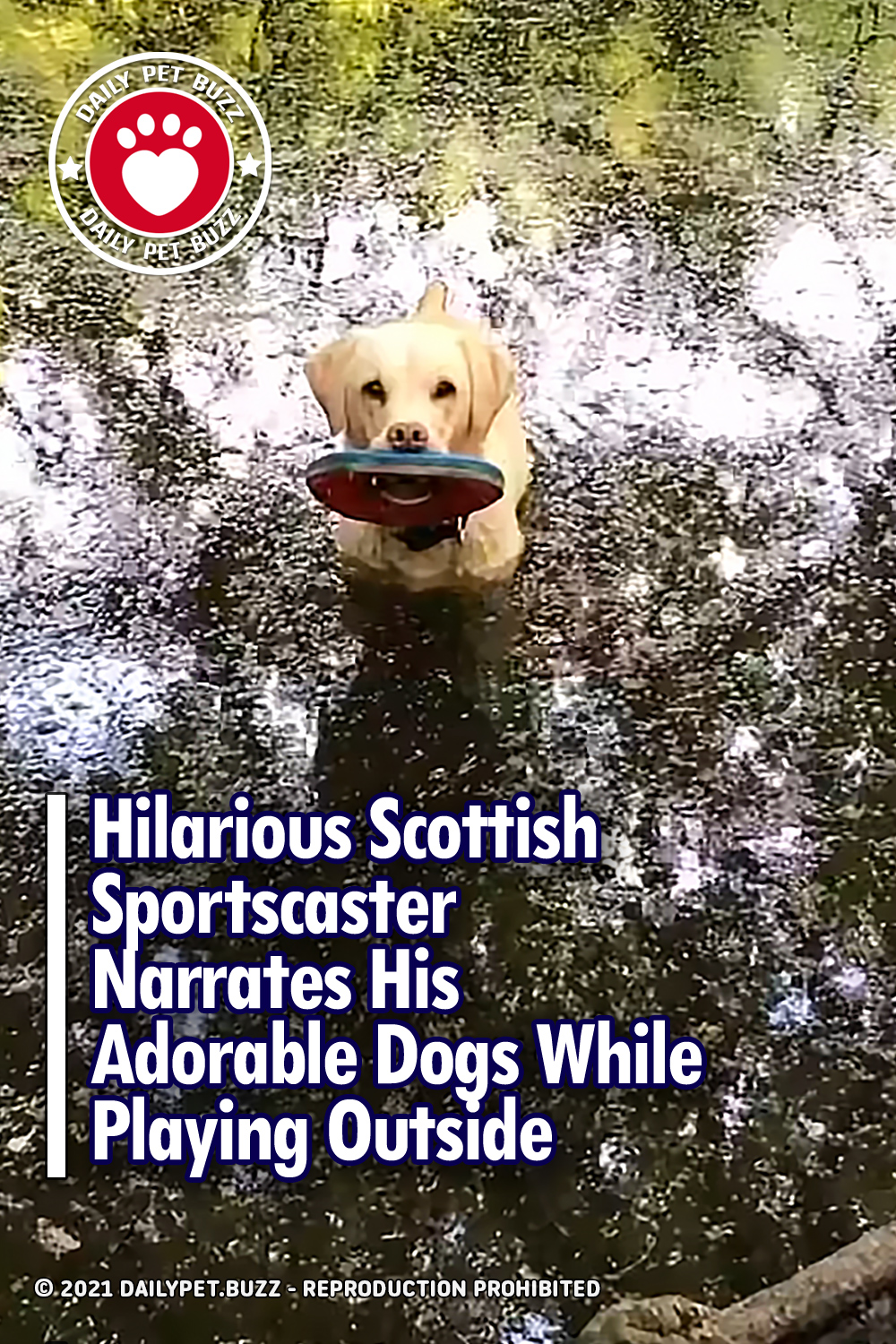 Hilarious Scottish Sportscaster Narrates His Adorable Dogs While Playing Outside