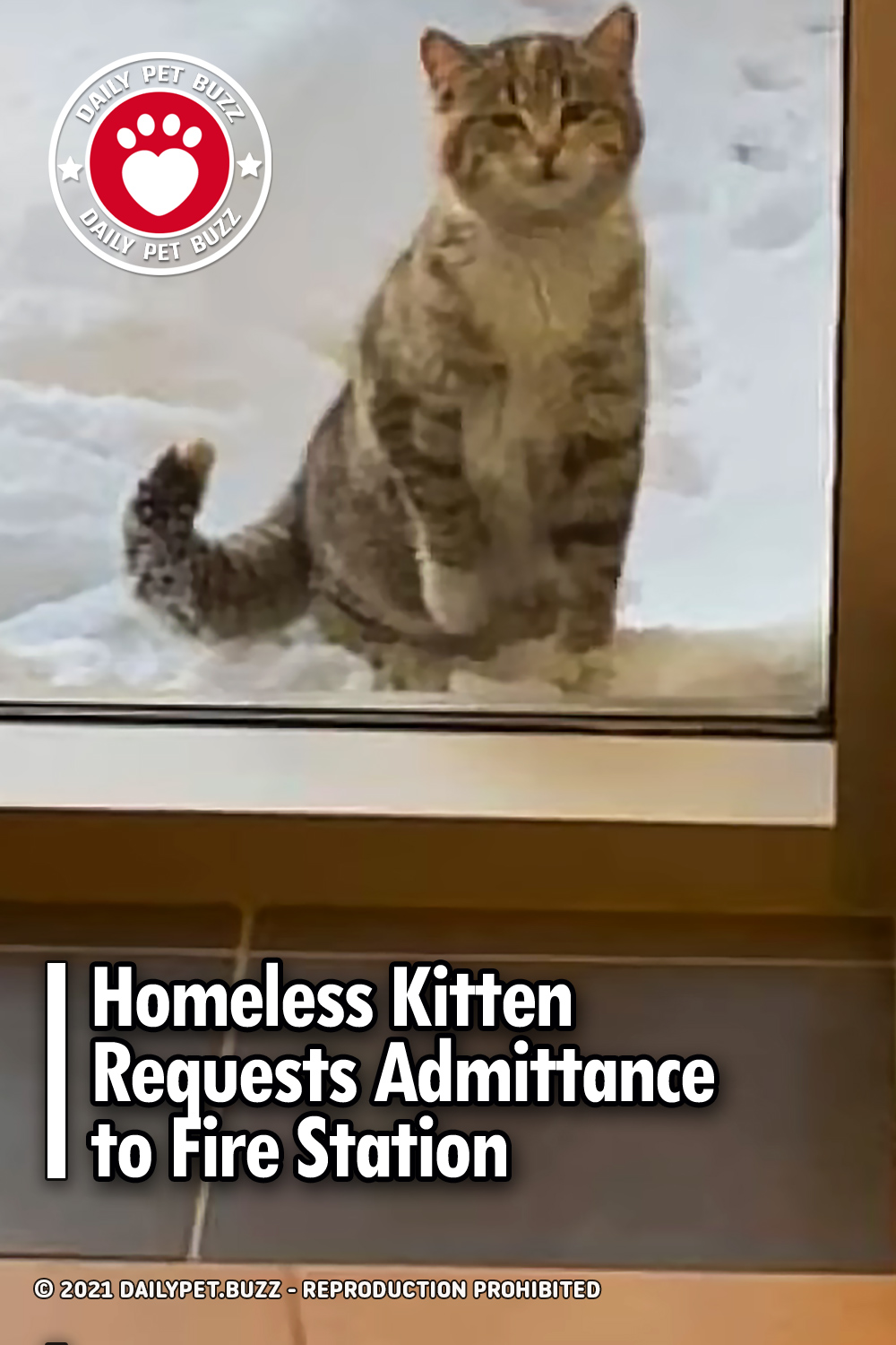 Homeless Kitten Requests Admittance to Fire Station