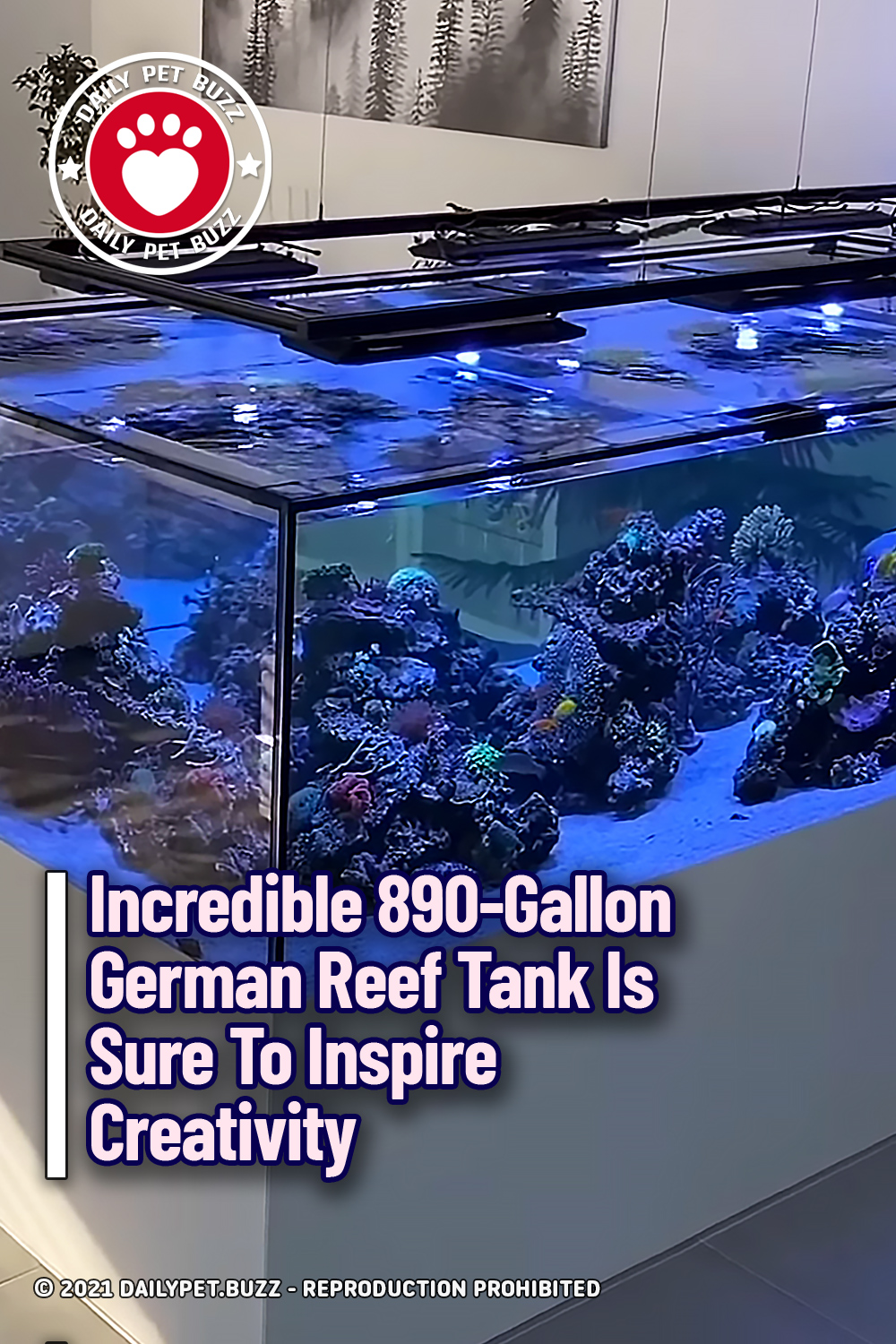 Incredible 890-Gallon German Reef Tank Is Sure To Inspire Creativity