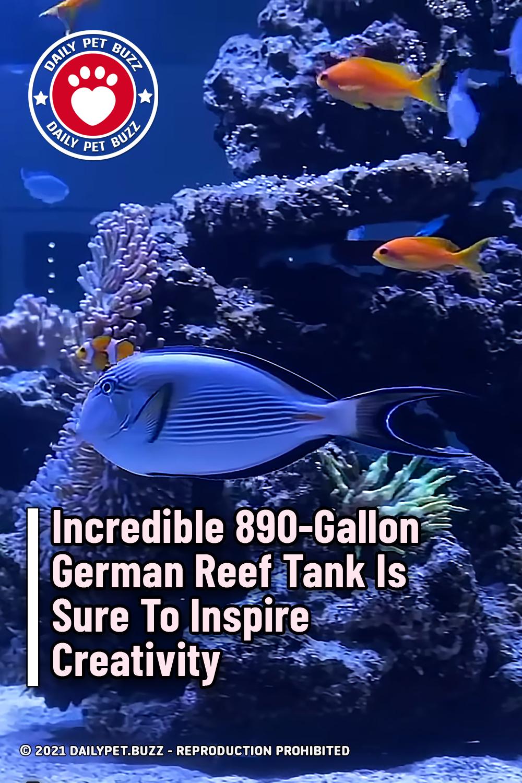 Incredible 890-Gallon German Reef Tank Is Sure To Inspire Creativity