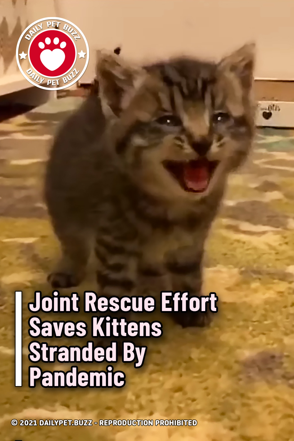 Joint Rescue Effort Saves Kittens Stranded By Pandemic