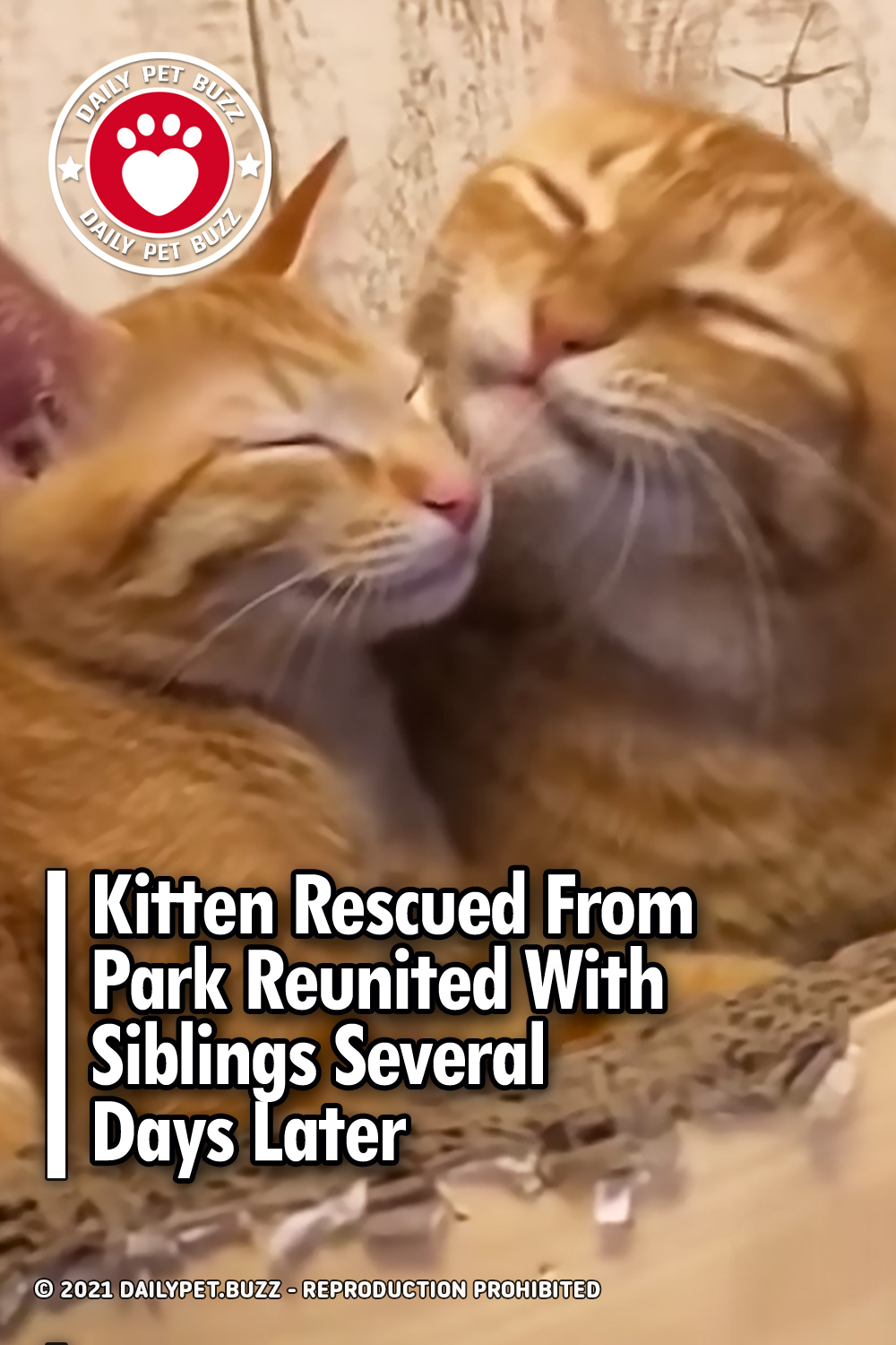Kitten Rescued From Park Reunited With Siblings Several Days Later