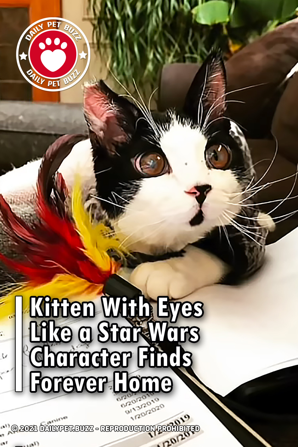 Kitten With Eyes Like a Star Wars Character Finds Forever Home