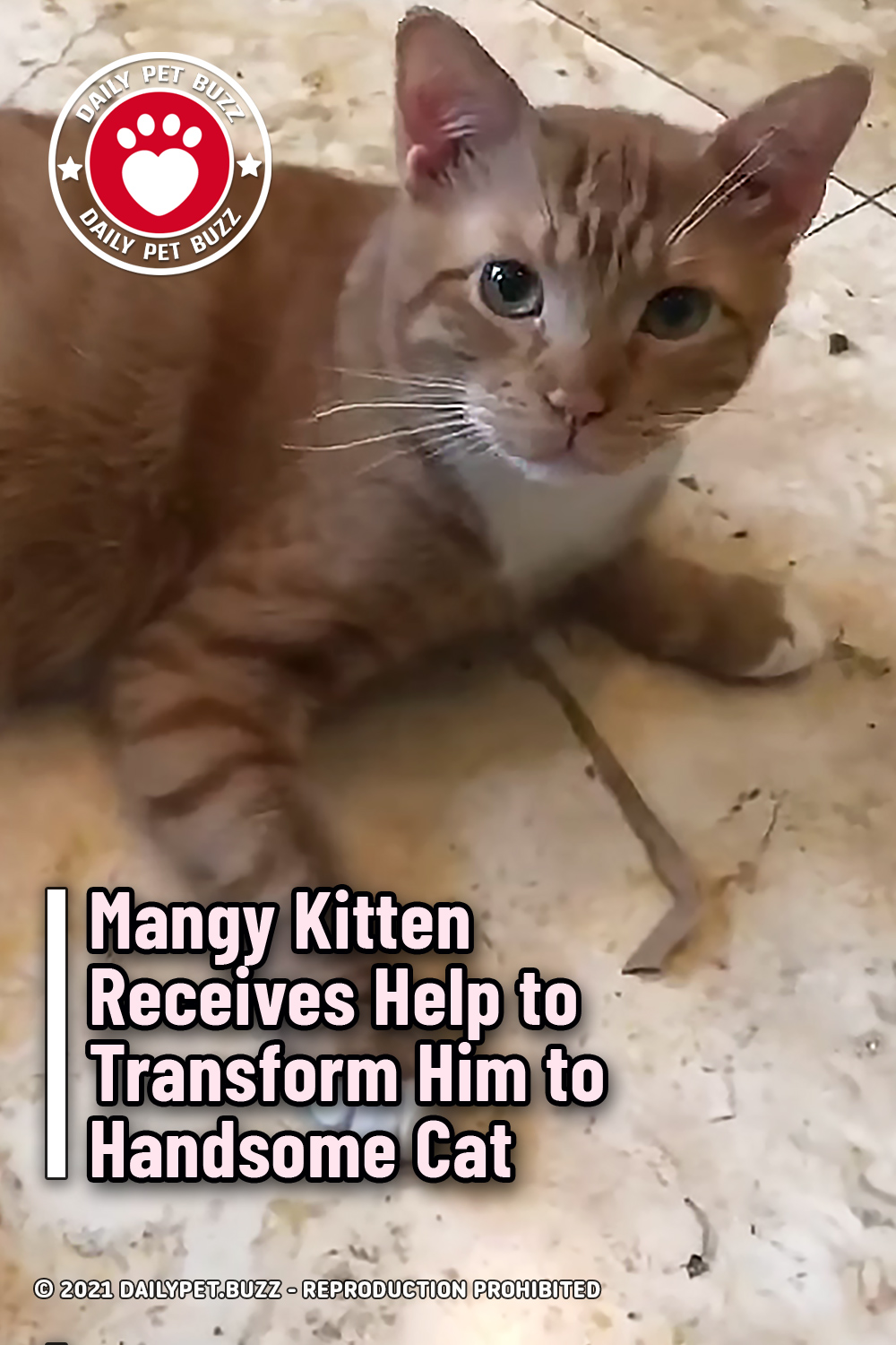 Mangy Kitten Receives Help to Transform Him to Handsome Cat