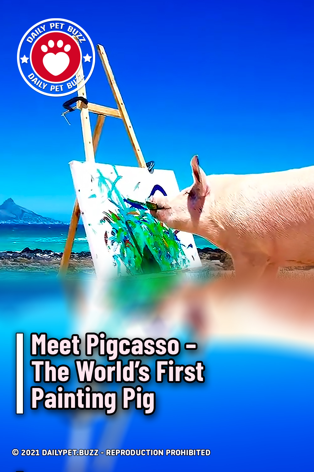 Meet Pigcasso - The World's First Painting Pig
