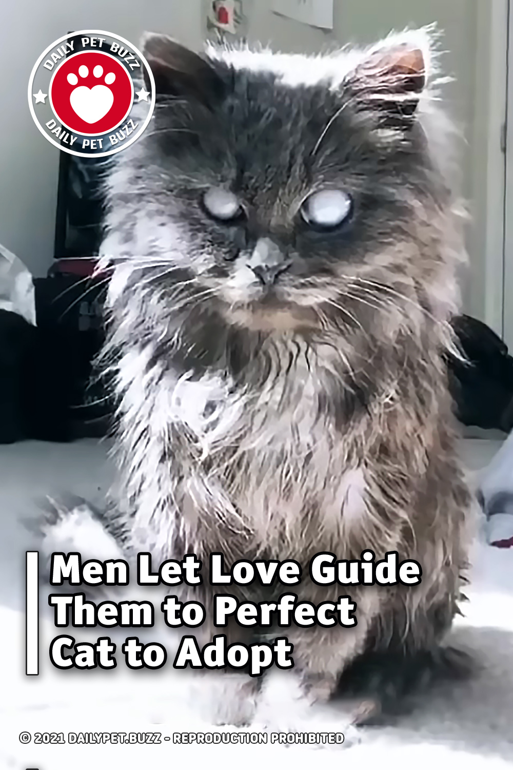 Men Let Love Guide Them to Perfect Cat to Adopt