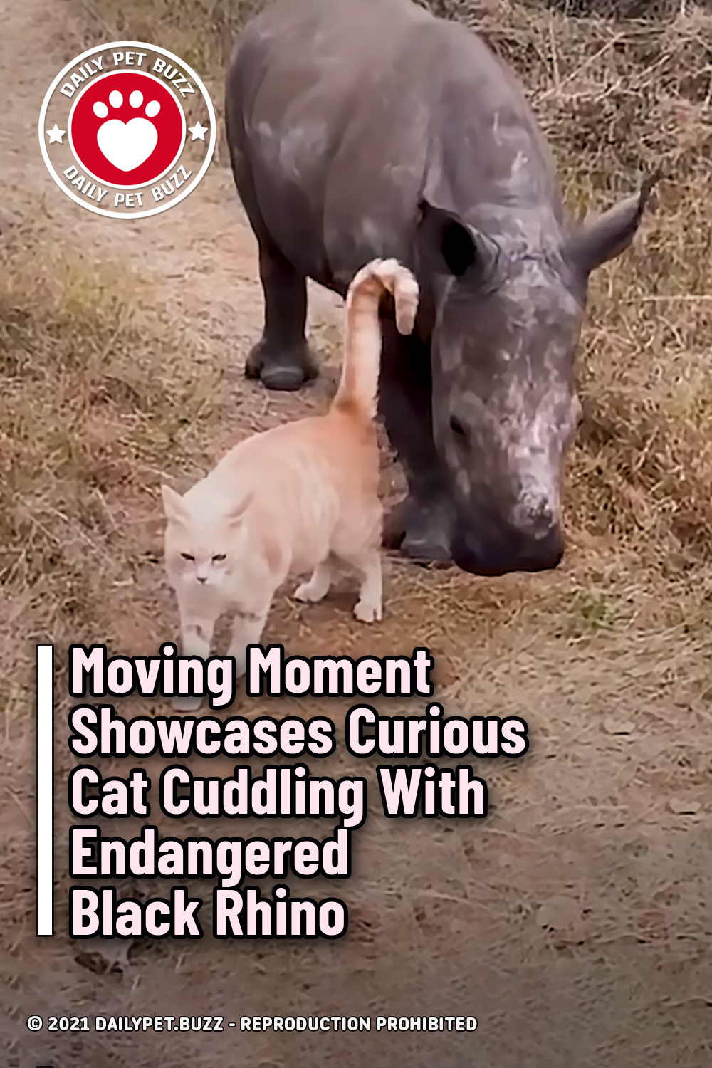 Moving Moment Showcases Curious Cat Cuddling With Endangered Black Rhino