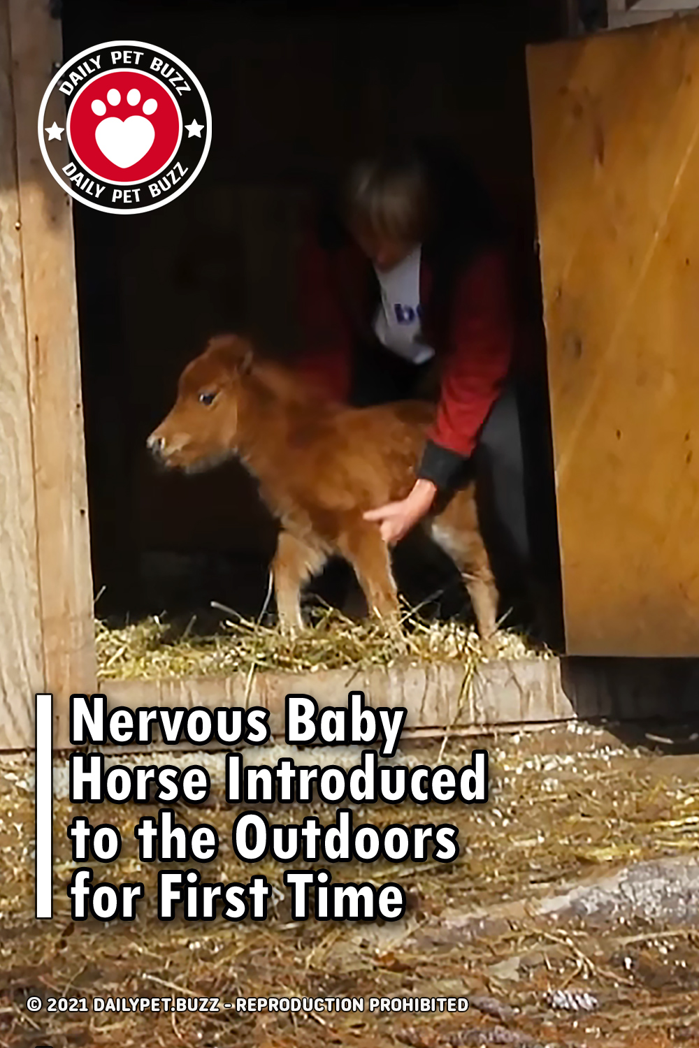 Nervous Baby Horse Introduced to the Outdoors for First Time