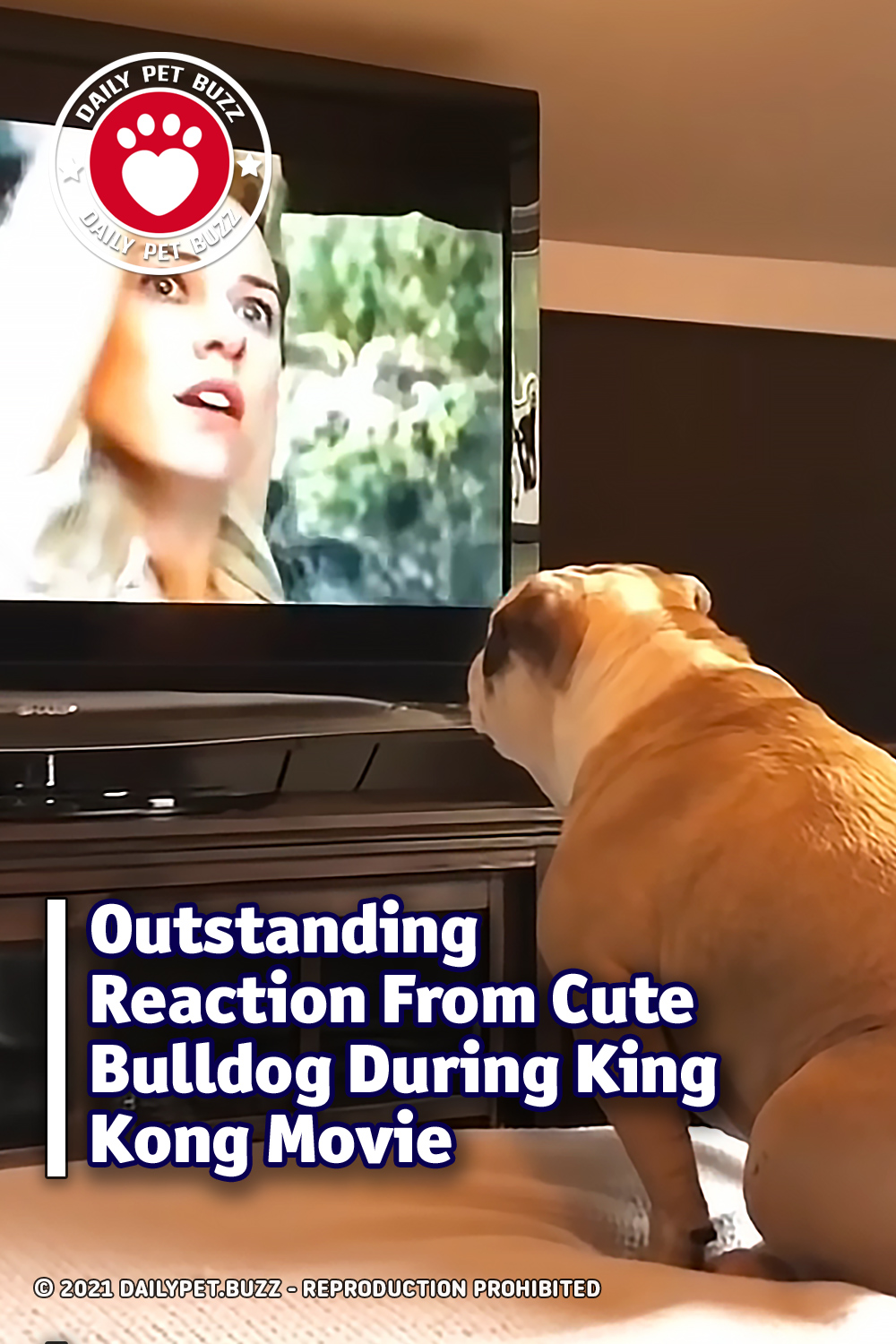 Outstanding Reaction From Cute Bulldog During King Kong Movie