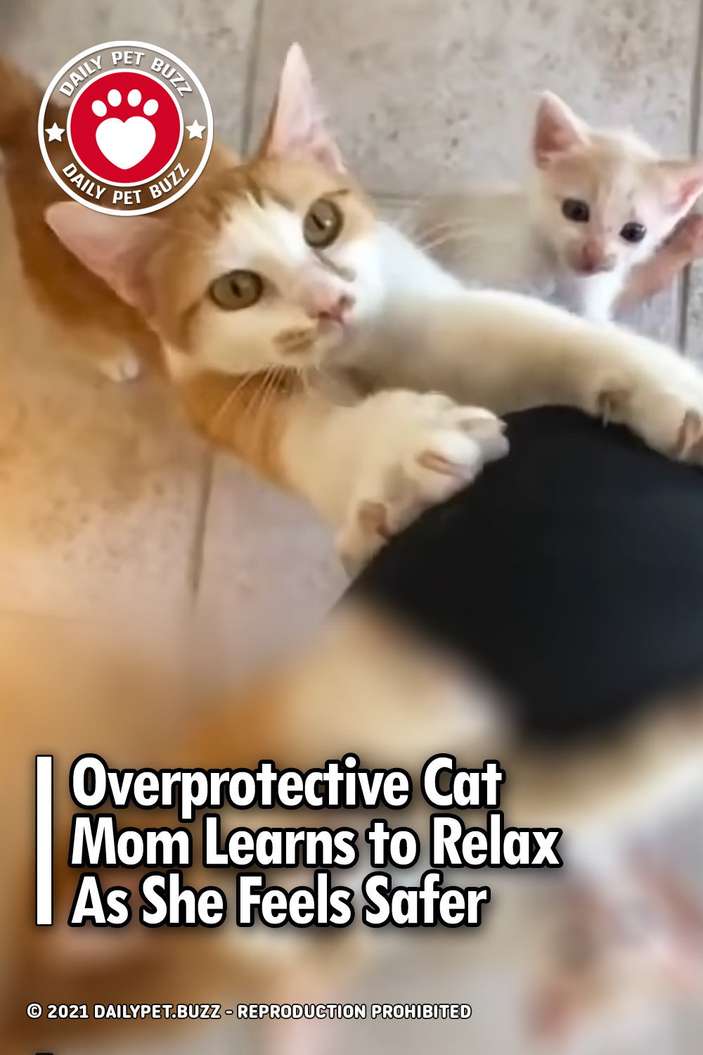 Overprotective Cat Mom Learns to Relax As She Feels Safer