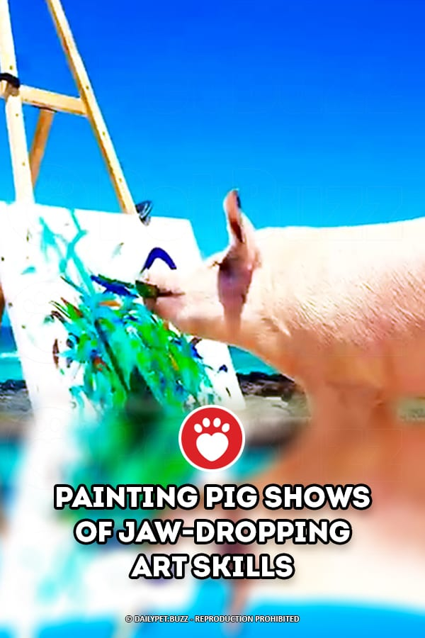 Painting Pig Shows of Jaw-Dropping Art Skills