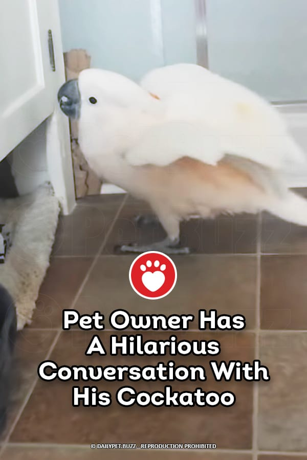 Pet Owner Has A Hilarious Conversation With His Cockatoo
