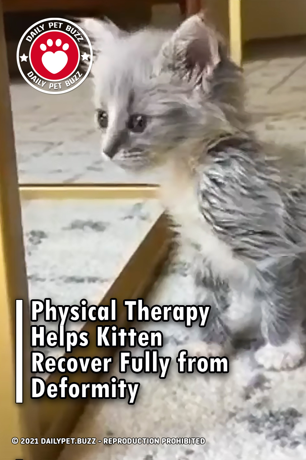 Physical Therapy Helps Kitten Recover Fully from Deformity