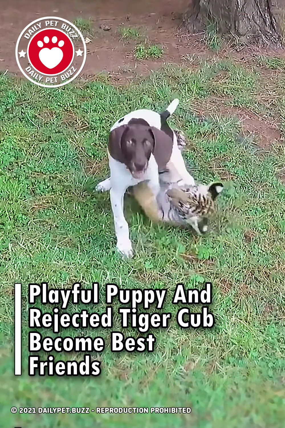 Playful Puppy And Rejected Tiger Cub Become Best Friends