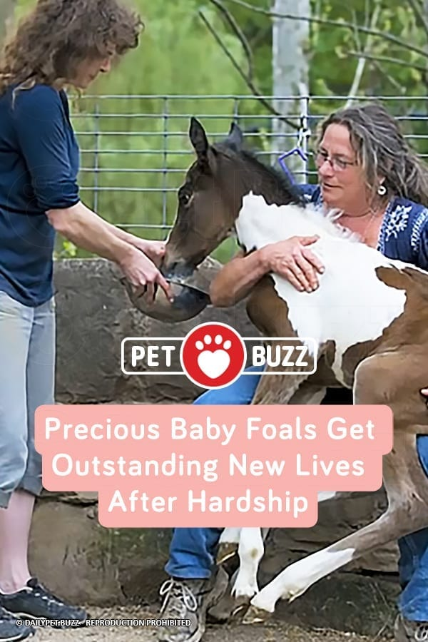 Precious Baby Foals Get Outstanding New Lives After Hardship