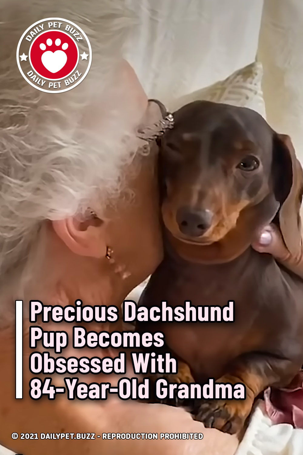 Precious Dachshund Pup Becomes Obsessed With 84-Year-Old Grandma