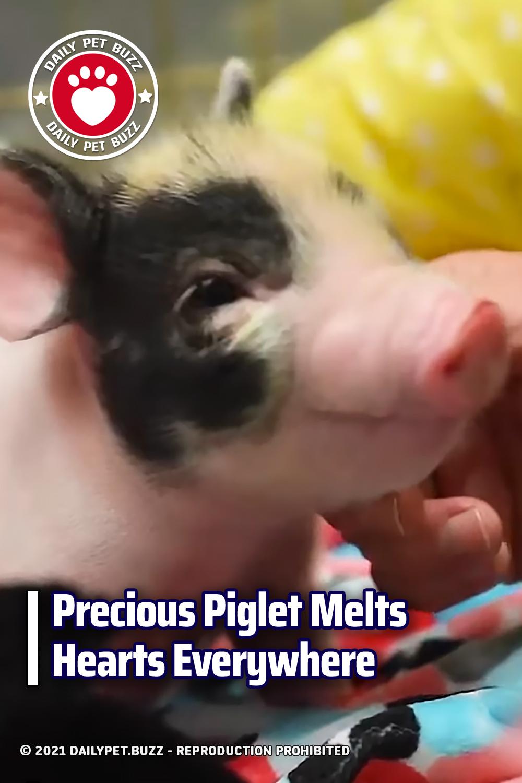 Precious Piglet Melts Hearts Everywhere
