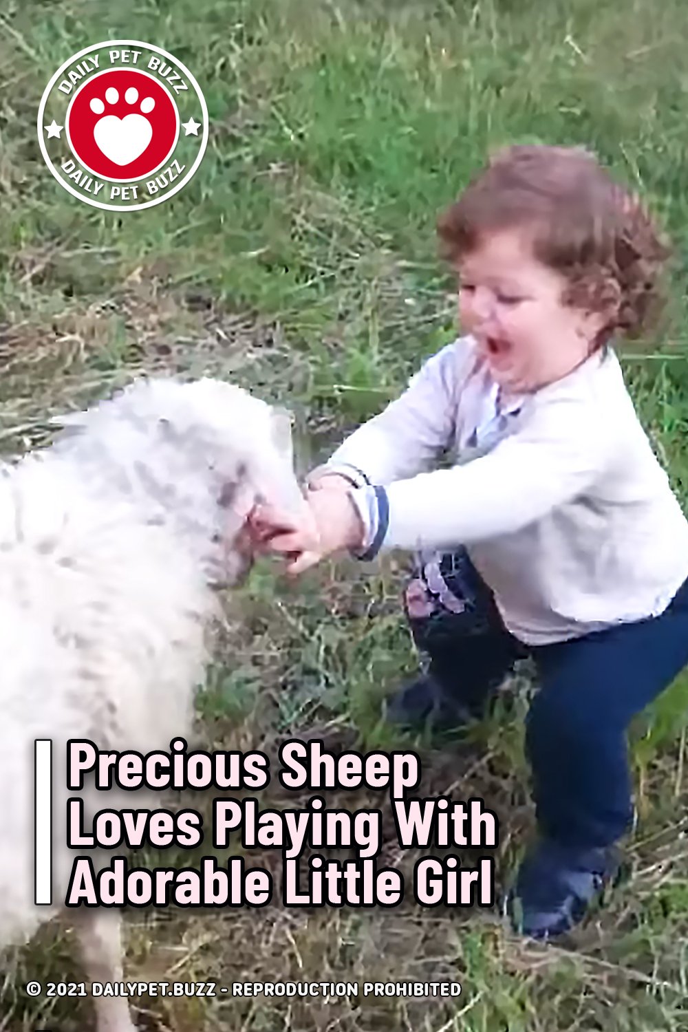 Precious Sheep Loves Playing With Adorable Little Girl