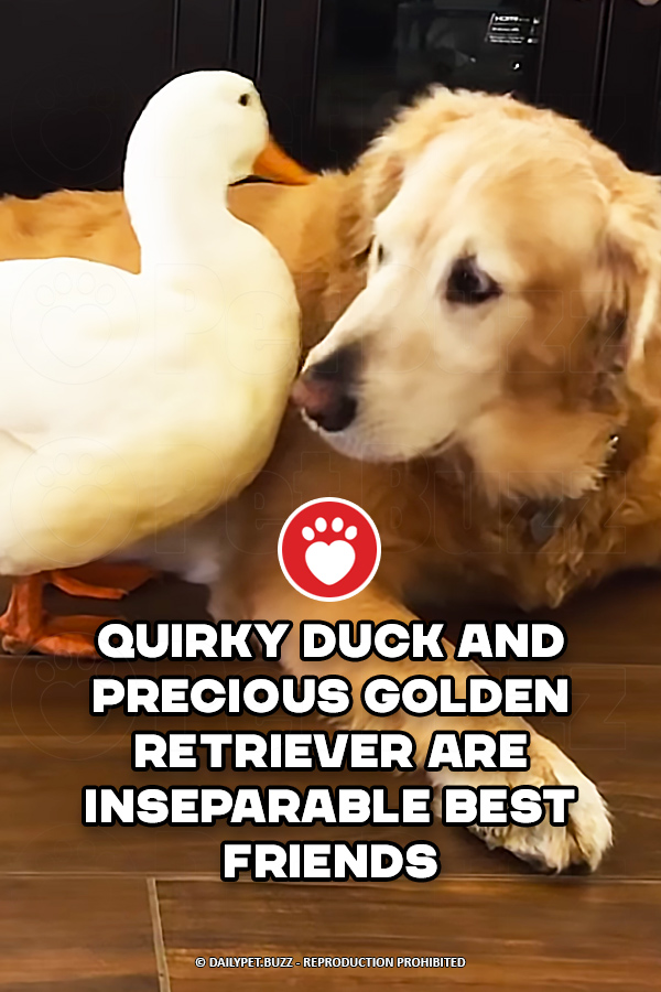 Quirky Duck and Precious Golden Retriever Are Inseparable Best Friends