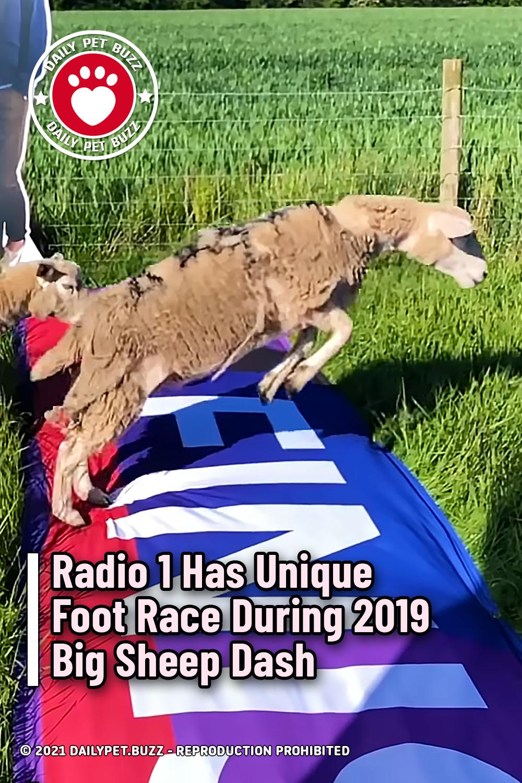 Radio 1 Has Unique Foot Race During Big Sheep Dash