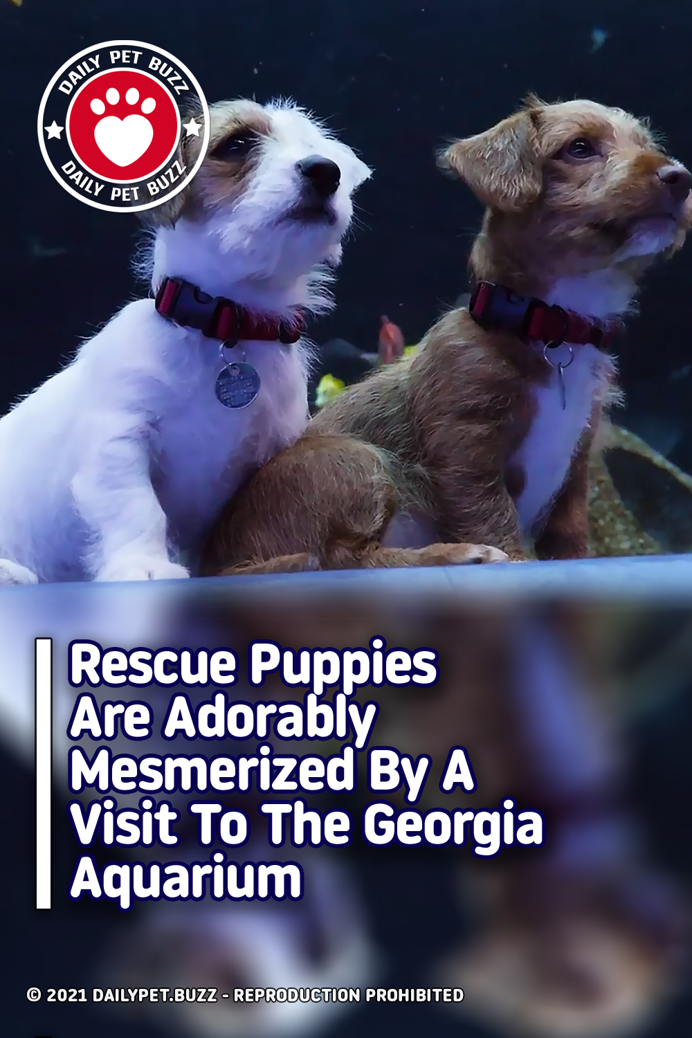 Rescue Puppies Are Adorably Mesmerized By A Visit To The Georgia Aquarium