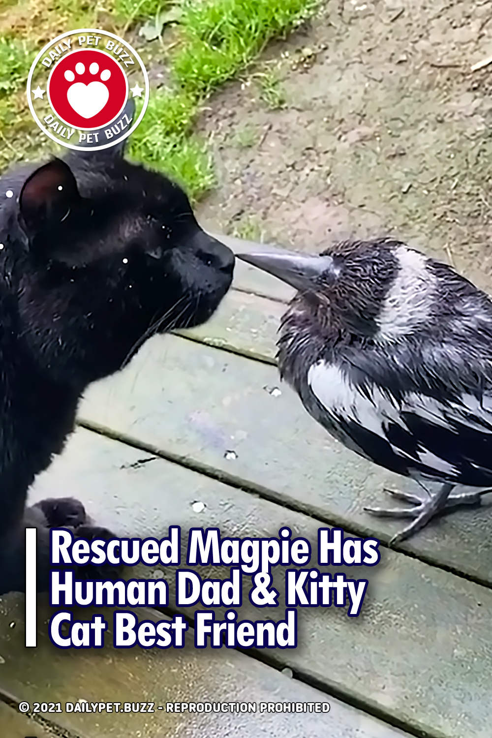 Rescued Magpie Has Human Dad & Kitty Cat Best Friend