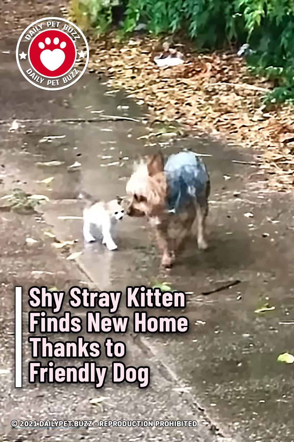 Shy Stray Kitten Finds New Home Thanks to Friendly Dog