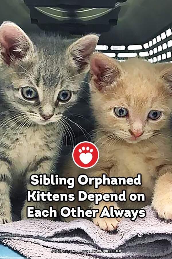 Orphaned Sibling Kittens Have a Strong Bond Forever