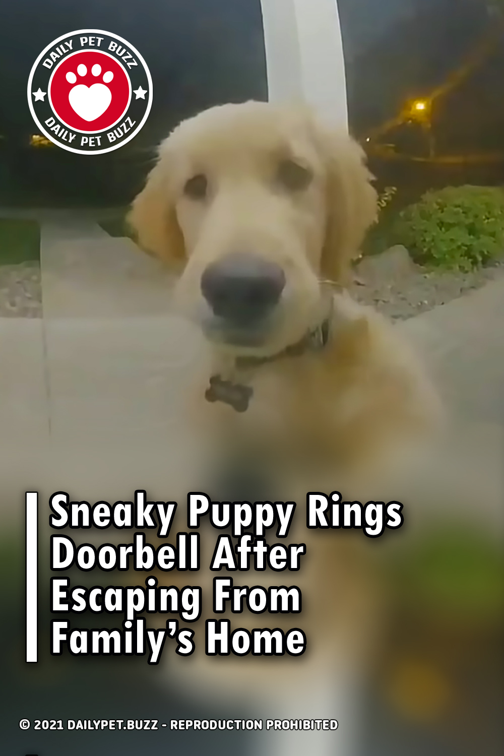 Sneaky Puppy Rings Doorbell After Escaping From Family's Home