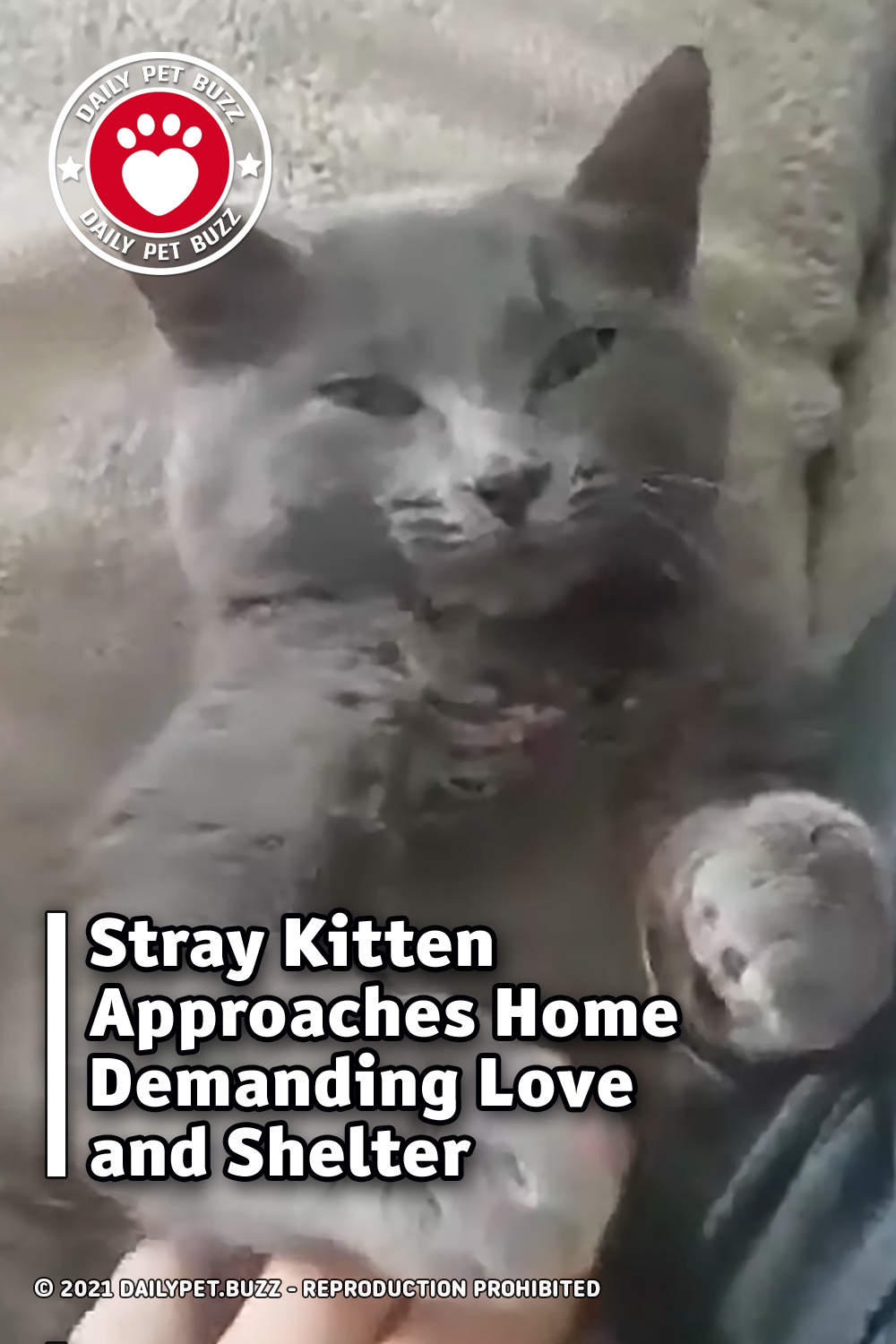 Stray Kitten Approaches Home Demanding Love and Shelter