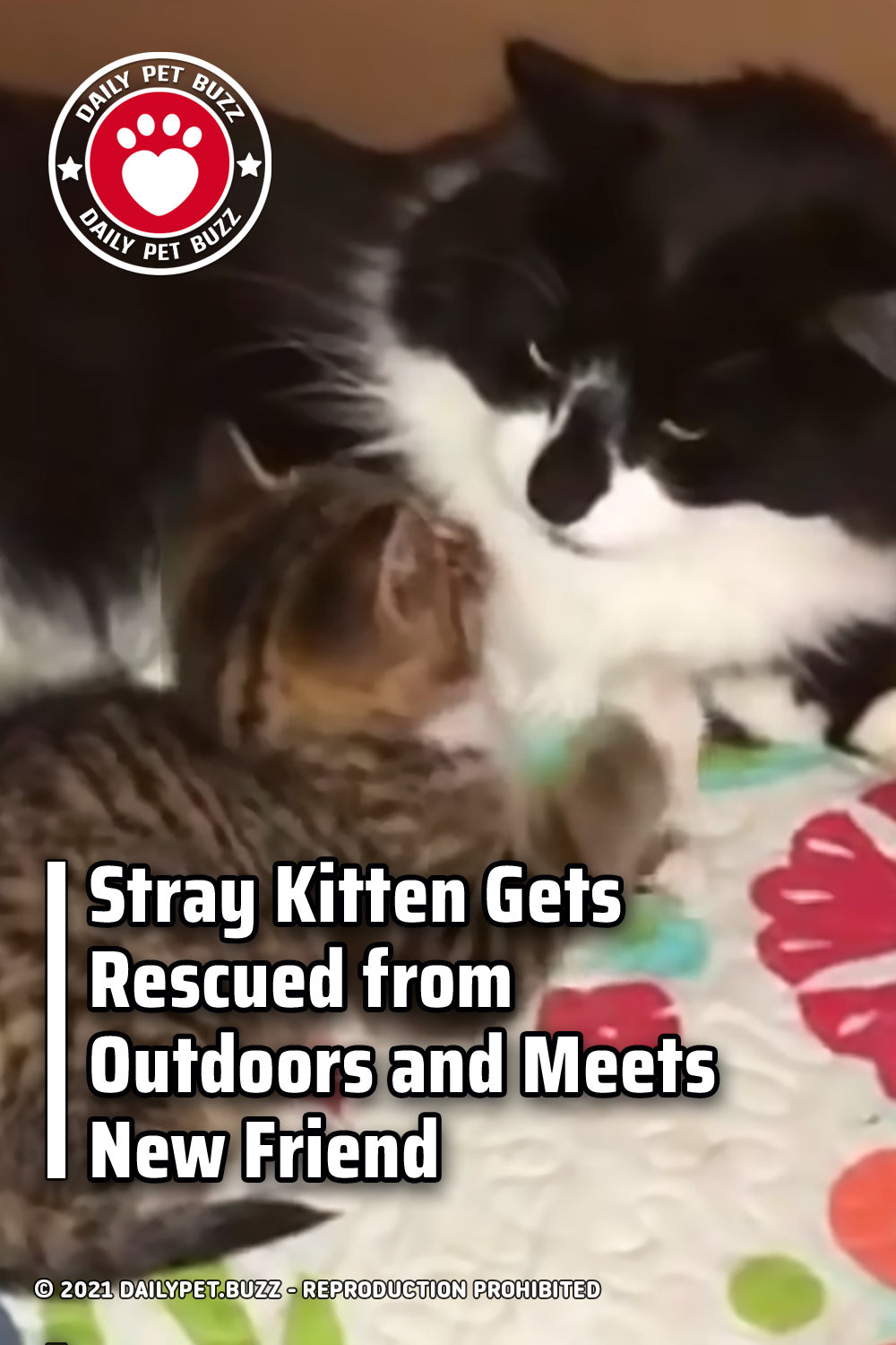 Stray Kitten Gets Rescued from Outdoors and Meets New Friend