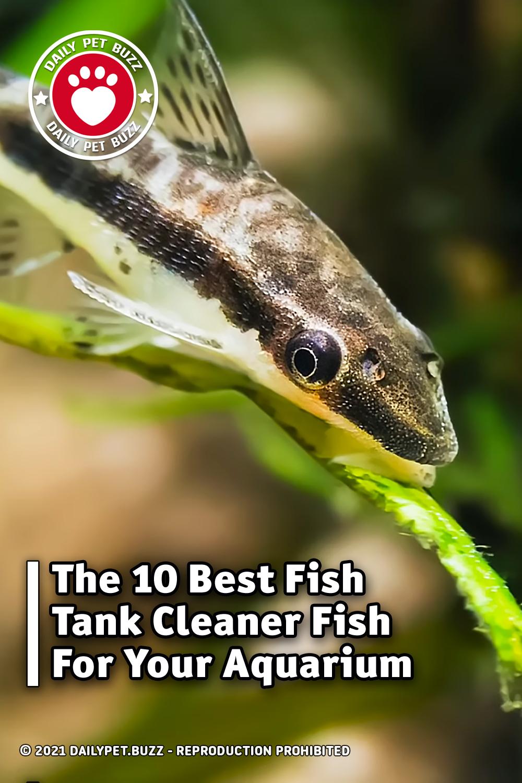 The 10 Best Fish Tank Cleaner Fish For Your Aquarium