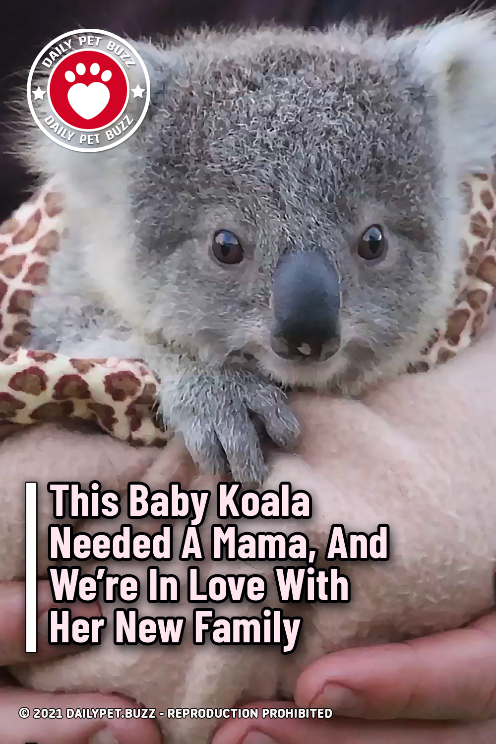 This Baby Koala Needed A Mama, And We're In Love With Her New Family