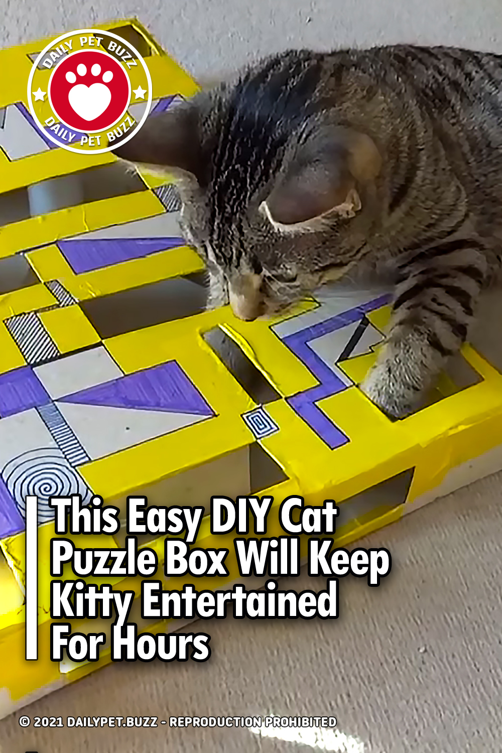 This Easy DIY Cat Puzzle Box Will Keep Kitty Entertained For Hours