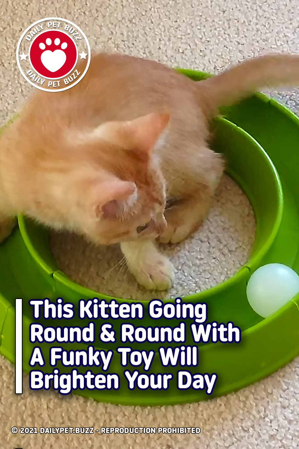 This Kitten Going Round & Round With A Funky Toy Will Brighten Your Day