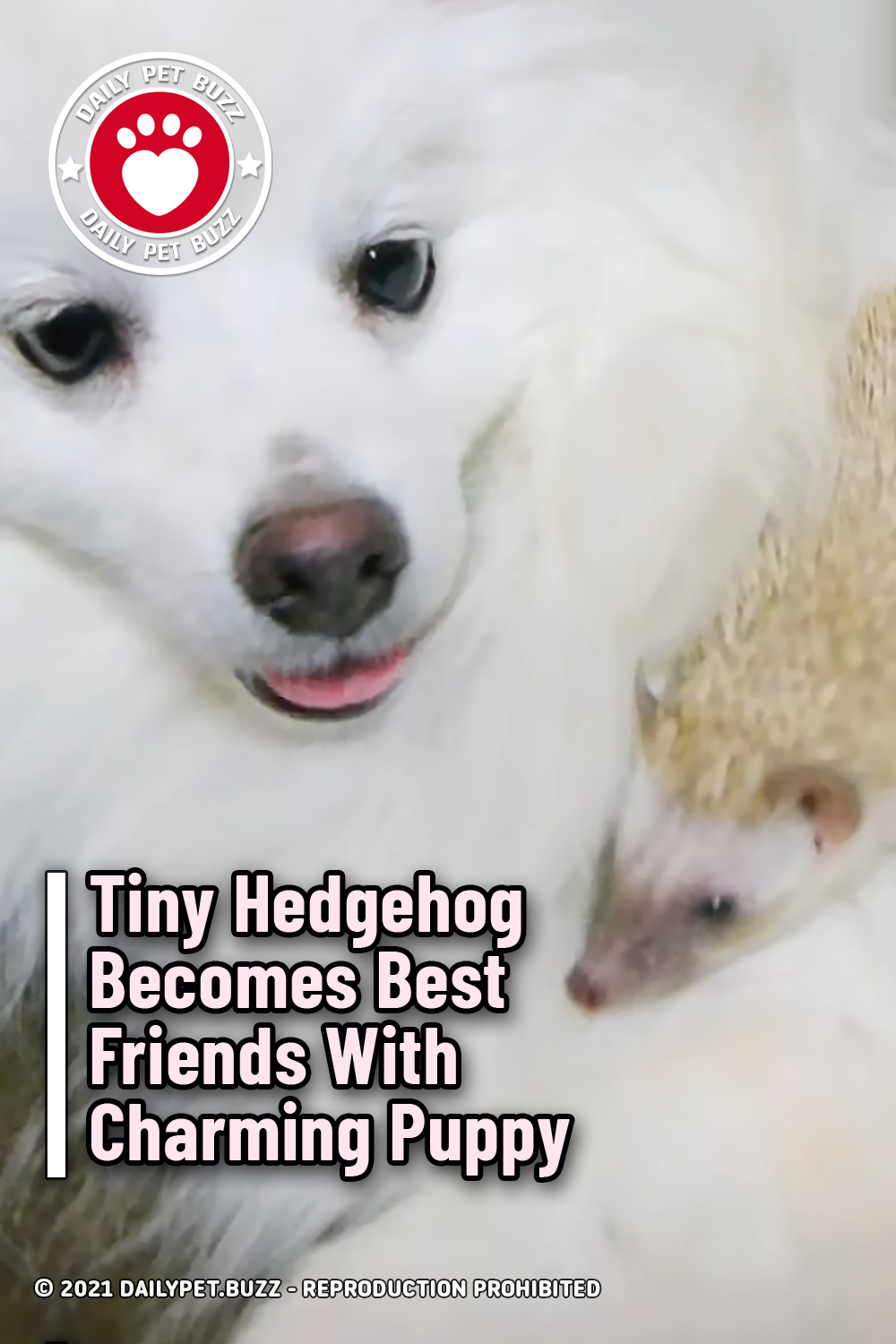 Tiny Hedgehog Becomes Best Friends With Charming Puppy