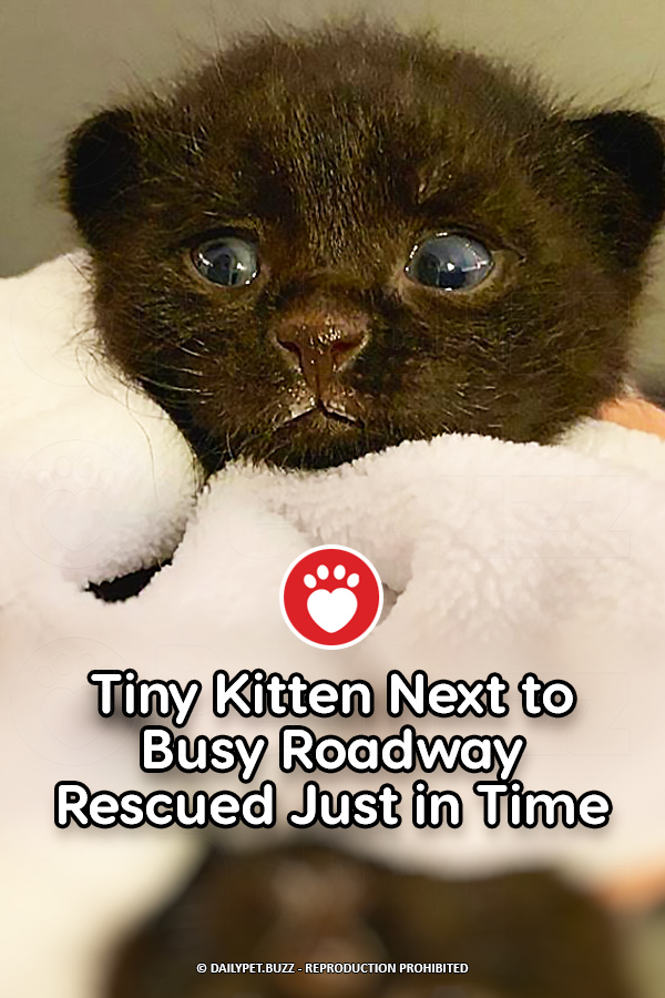 Tiny Kitten Next to Busy Roadway Rescued Just in Time