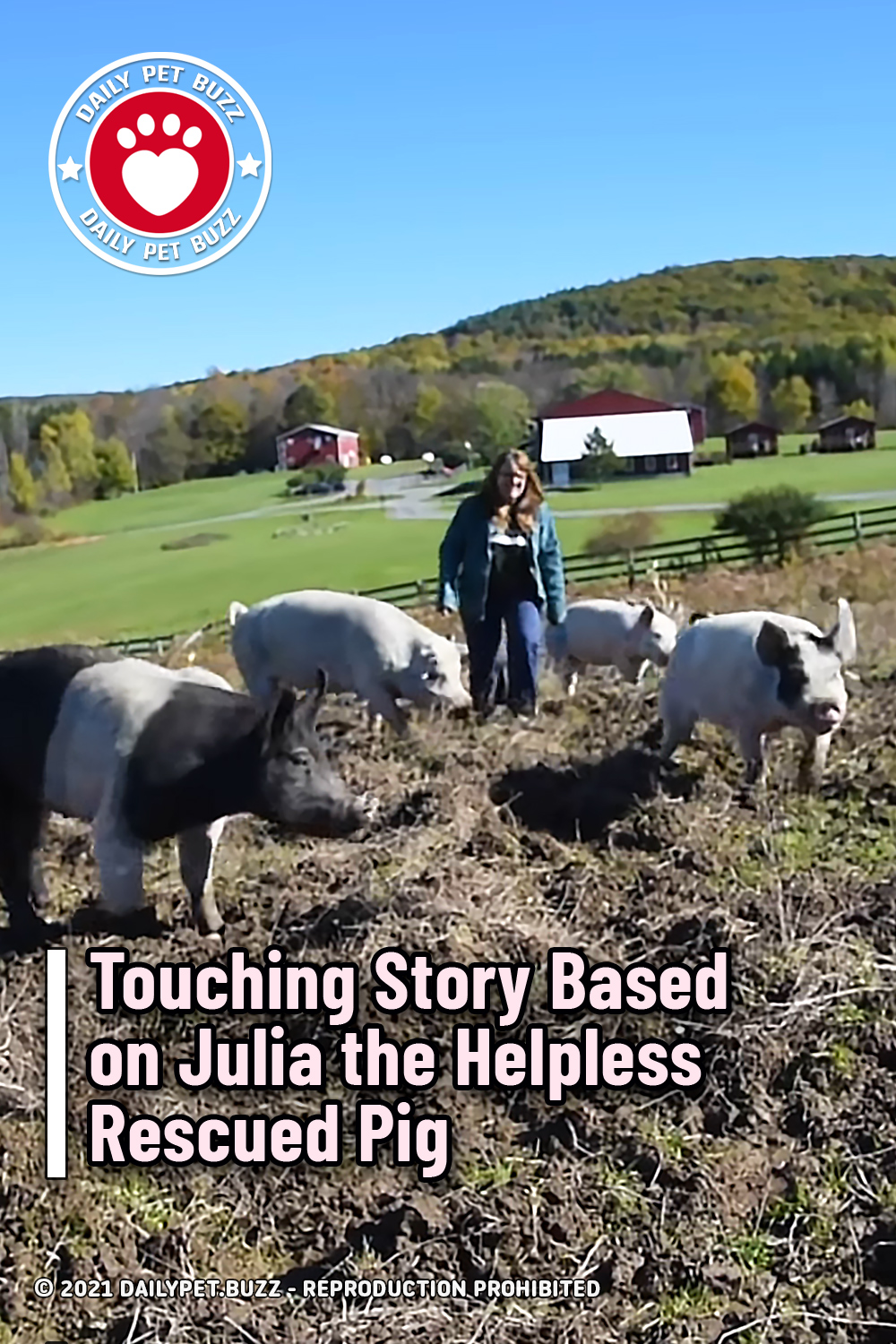 Touching Story Based on Julia the Helpless Rescued Pig