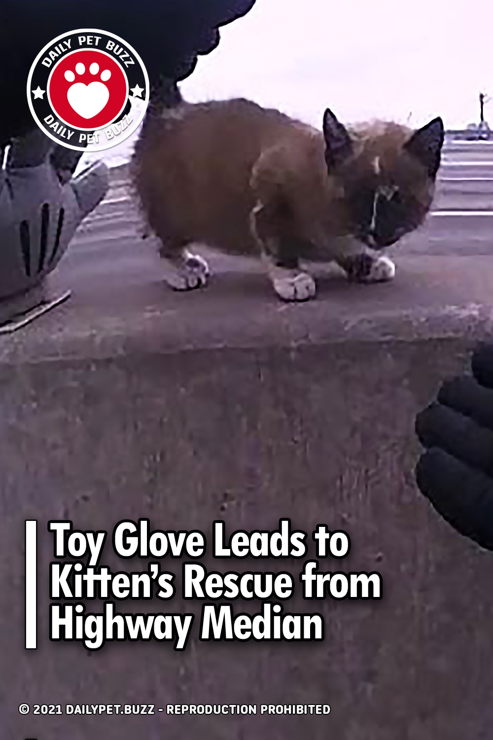 Toy Glove Leads to Kitten's Rescue from Highway Median