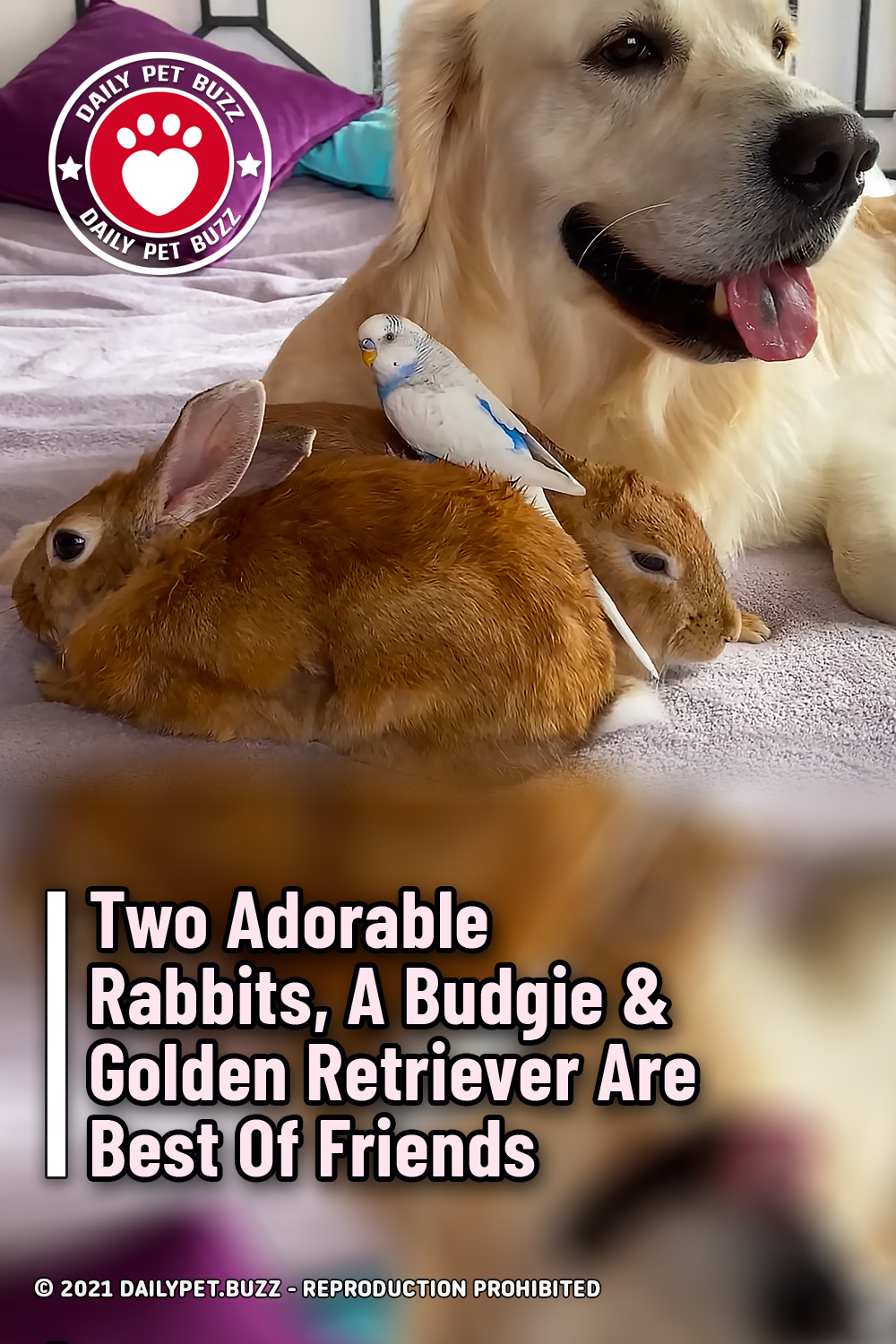 Two Adorable Rabbits, A Budgie & Golden Retriever Are Best Of Friends