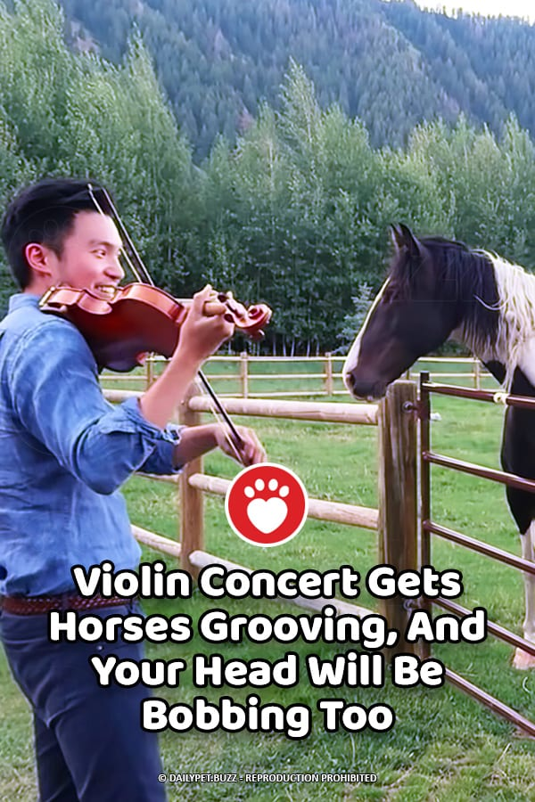 Violin Concert Gets Horses Grooving, And Your Head Will Be Bobbing Too